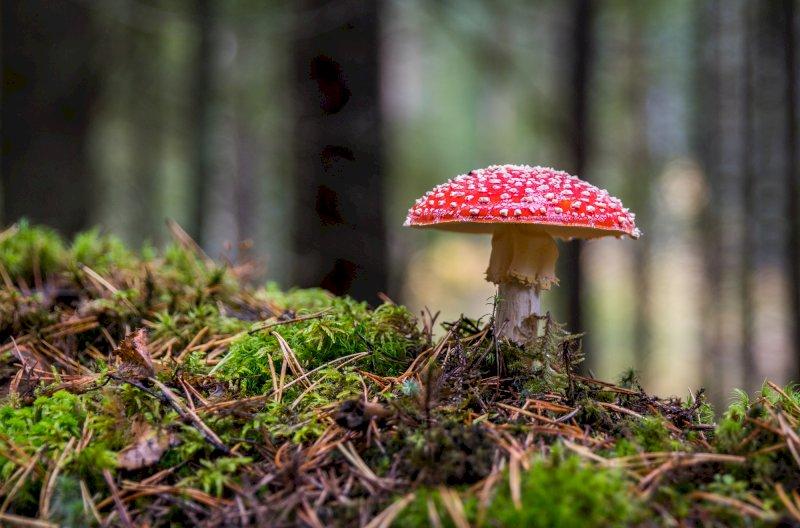 Cueillette et consommation de champignons : les bonnes pratiques