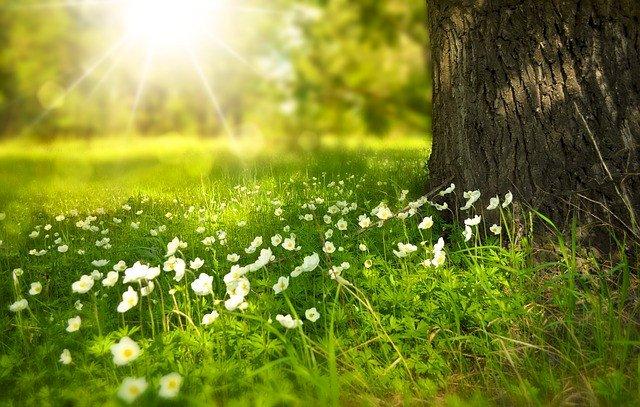 Balades et sorties nature : l'Agenda