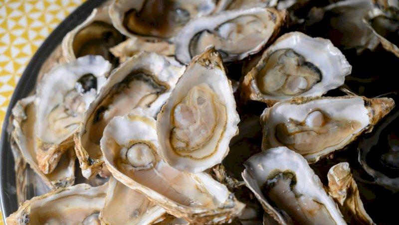 Baie de Bourgneuf-en-Retz. Pêche aux coquillages interdite