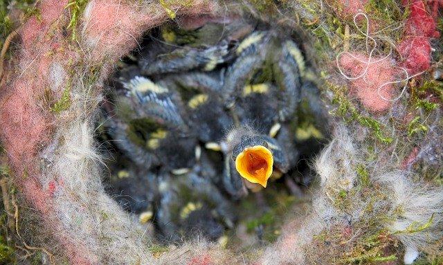 OFB préconise de ne pas tailler les haies en période de nidification des oiseaux