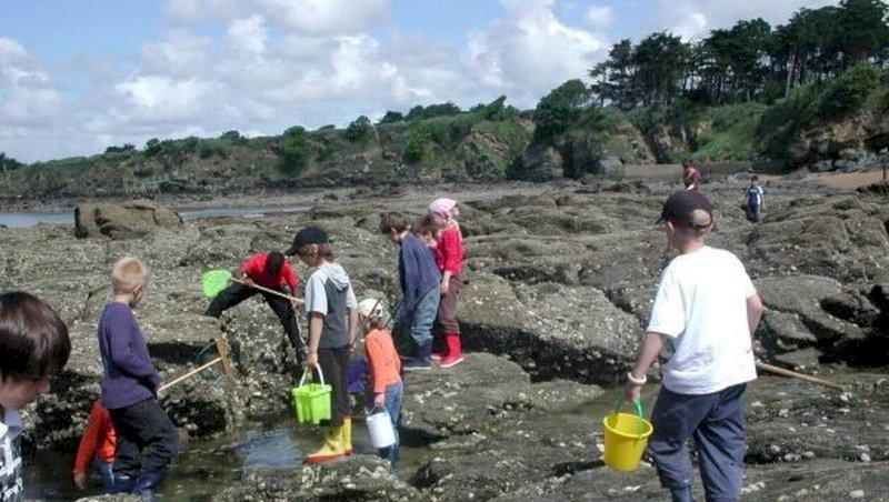 Pornic. Les 8-10 ans découvrent la plage à marée basse