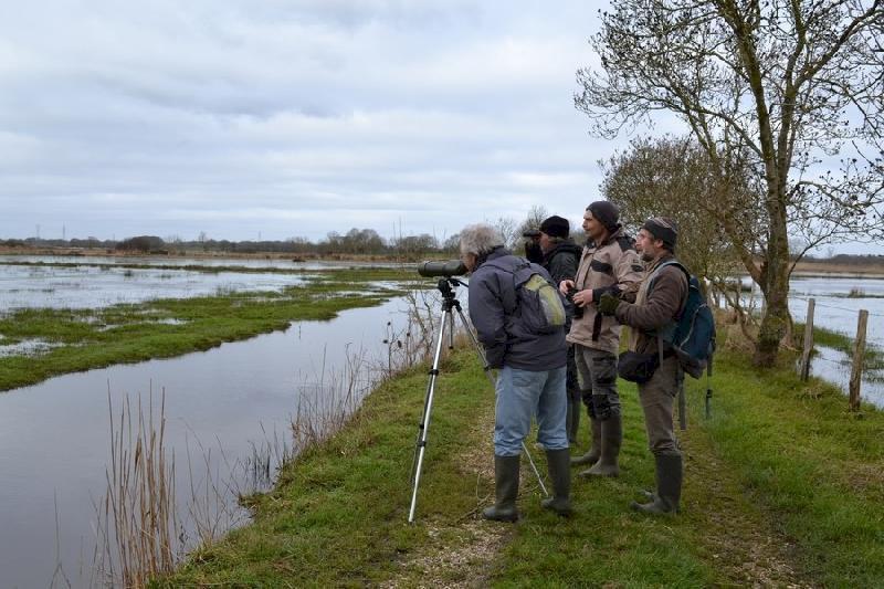 Observation des oiseaux des marais de Prinquiau et Besné