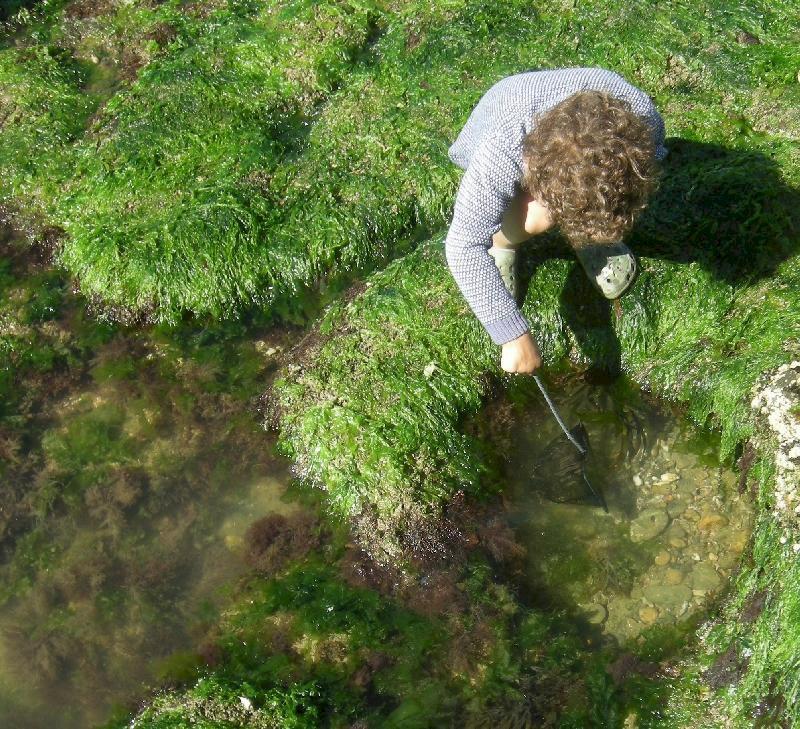 A la découverte des algues