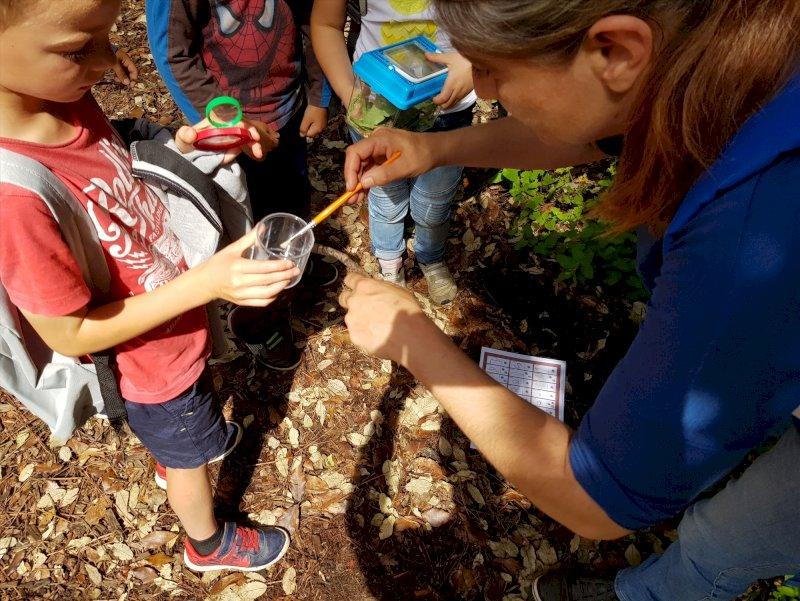 Activité enfants «Course aux insectes»