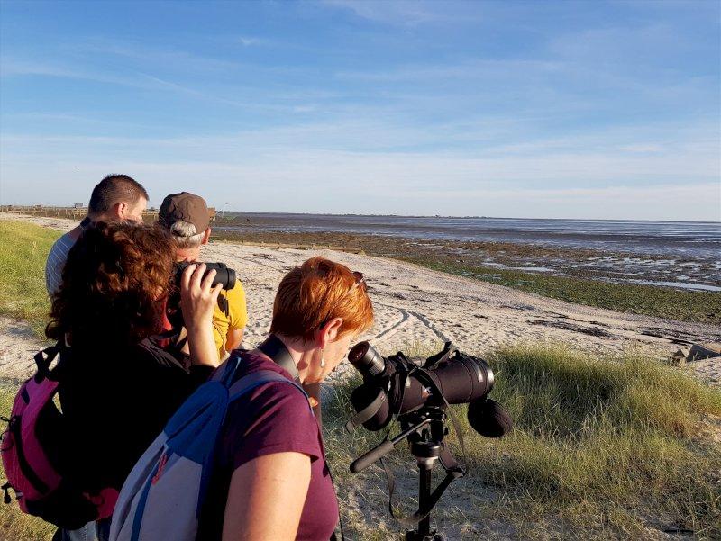 Les oiseaux de la baie de Bourgneuf