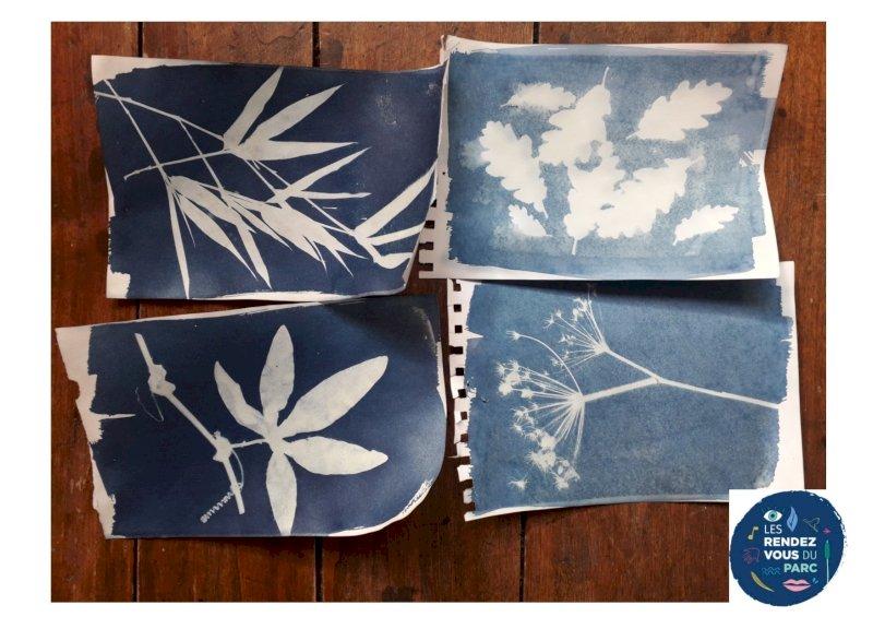 Atelier l'herbier bleu