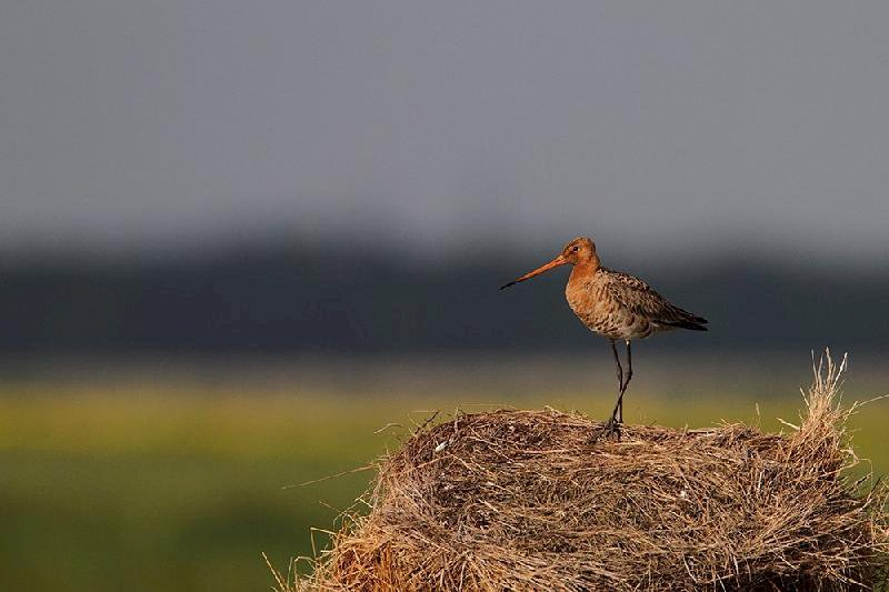 Comment suivre les oiseaux migrateurs en Brière ?