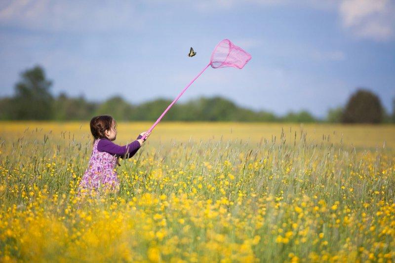 Des papillons dans le ciel puis dans votre filet : découverte des papillons