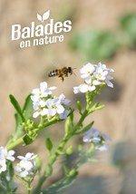 A la découverte des abeilles sauvages