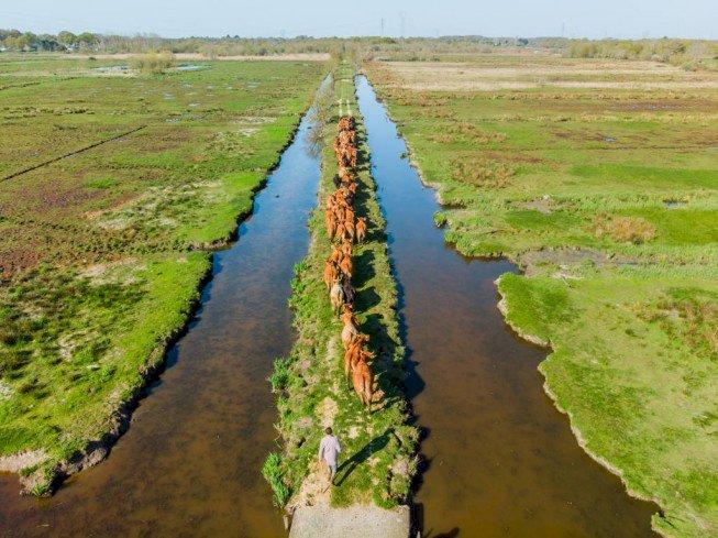Conférence Pascal Collin : L'Estuaire vu du ciel en drone
