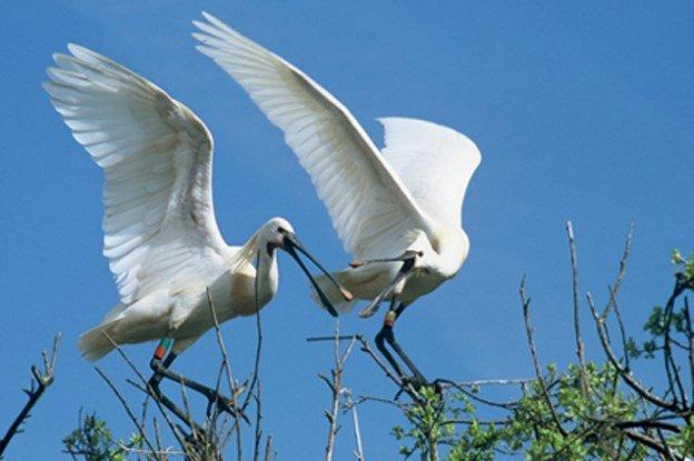 Diaporama « Les Oiseaux du Pays Blanc »