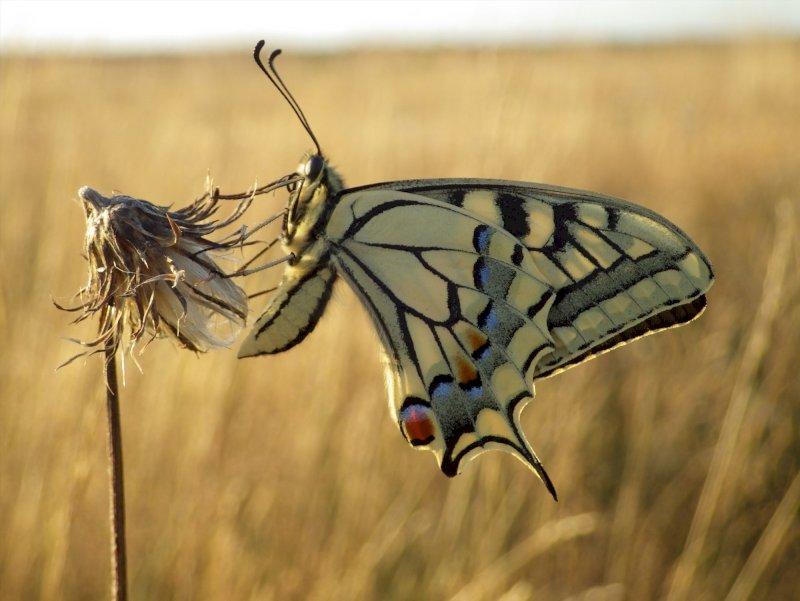 Tous aux papillons - Atlas de la biodiversité communale