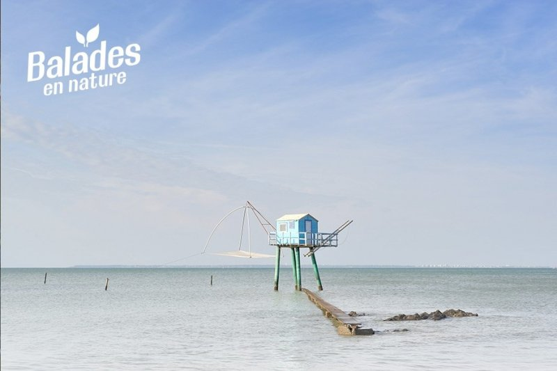 À la découverte du petit monde de la plage