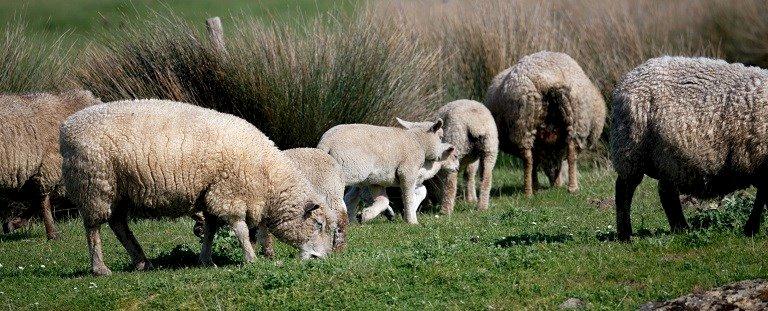 Plantes et moutons