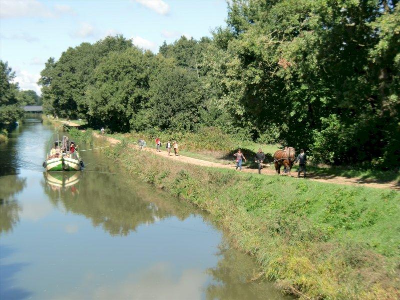 Vivez le halage comme autrefois sur le canal : balade avec des chevaux de trait