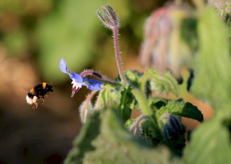 Escape Game, Mission pollinisateurs