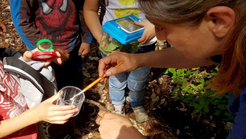 Saint-Brevin-les-Pins. Activité découverte des insectes | Presse Océan