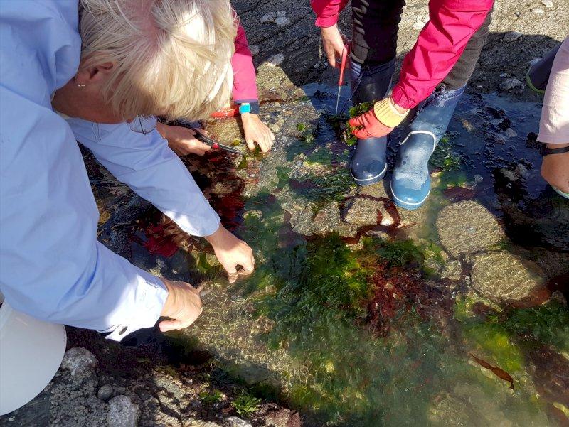Activité «Les algues, de la cueillette à l'assiette»