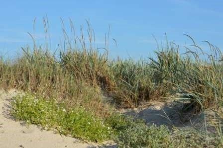 Sortie nature «La dune, entre terre et mer»