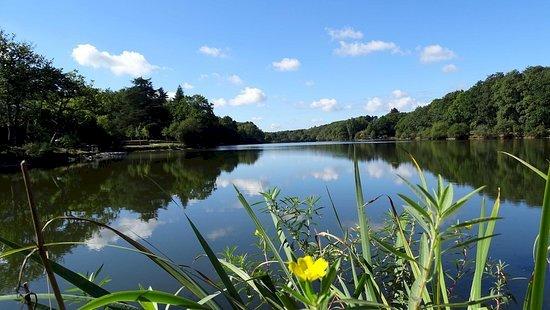 Le lac de Savenay
