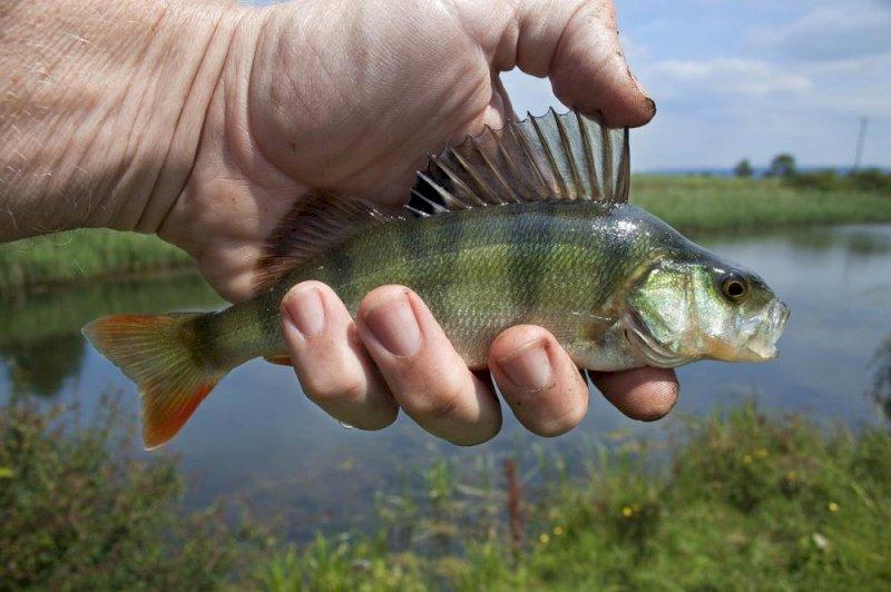 Concours pêche au coup
