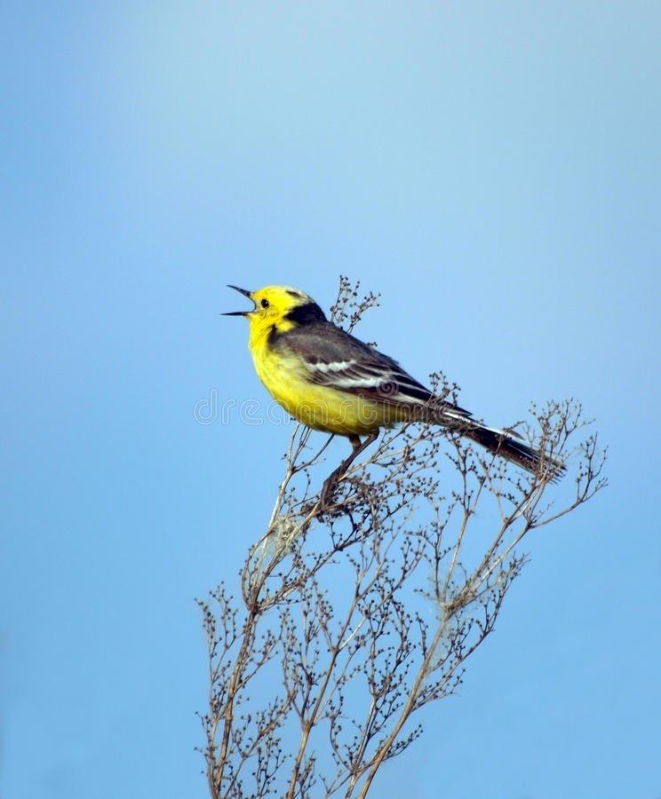 A l'écoute du chant matinal des oiseaux