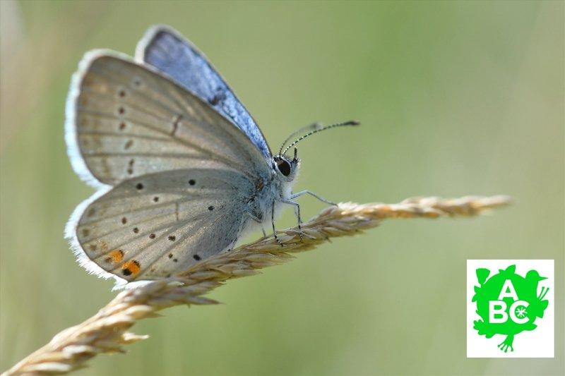 Tous aux papillons