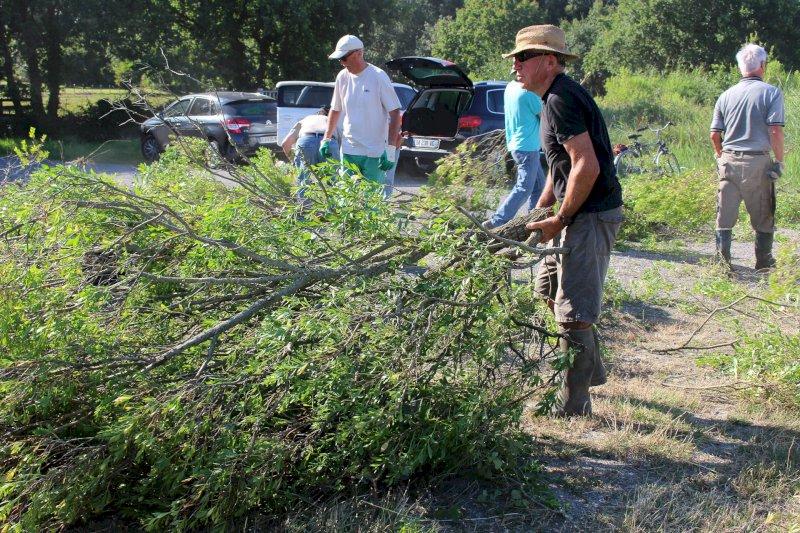 Chantier coupe de Baccharis pour protéger la biodiversité