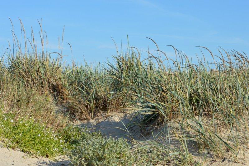 La dune entre terre et mer-Animaux / Faune / Flore, Nature et environnement   ST BREVIN LES PINS