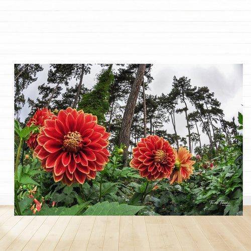 Photographie imprimée sur plexiglas 20 x 30 cm, art floral, décoration murale