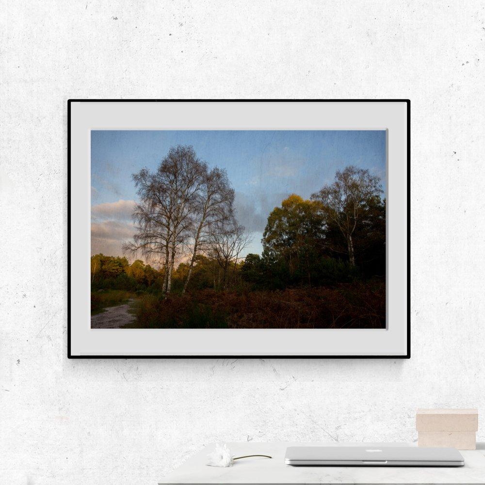 Photographie signée, Apremont, Forêt de Fontainebleau, 21 x 30 cm, Tirage fine Art sur Canson