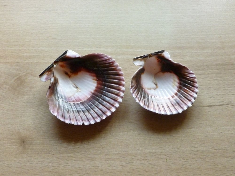 2 coquilles st jacques