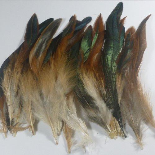 10 plumes de coq naturelles 15 à 18cm