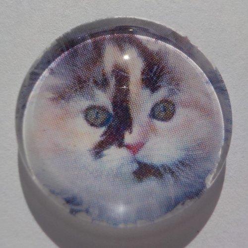 Cabochon, chat, tricolore, verre, rond, 20 mm