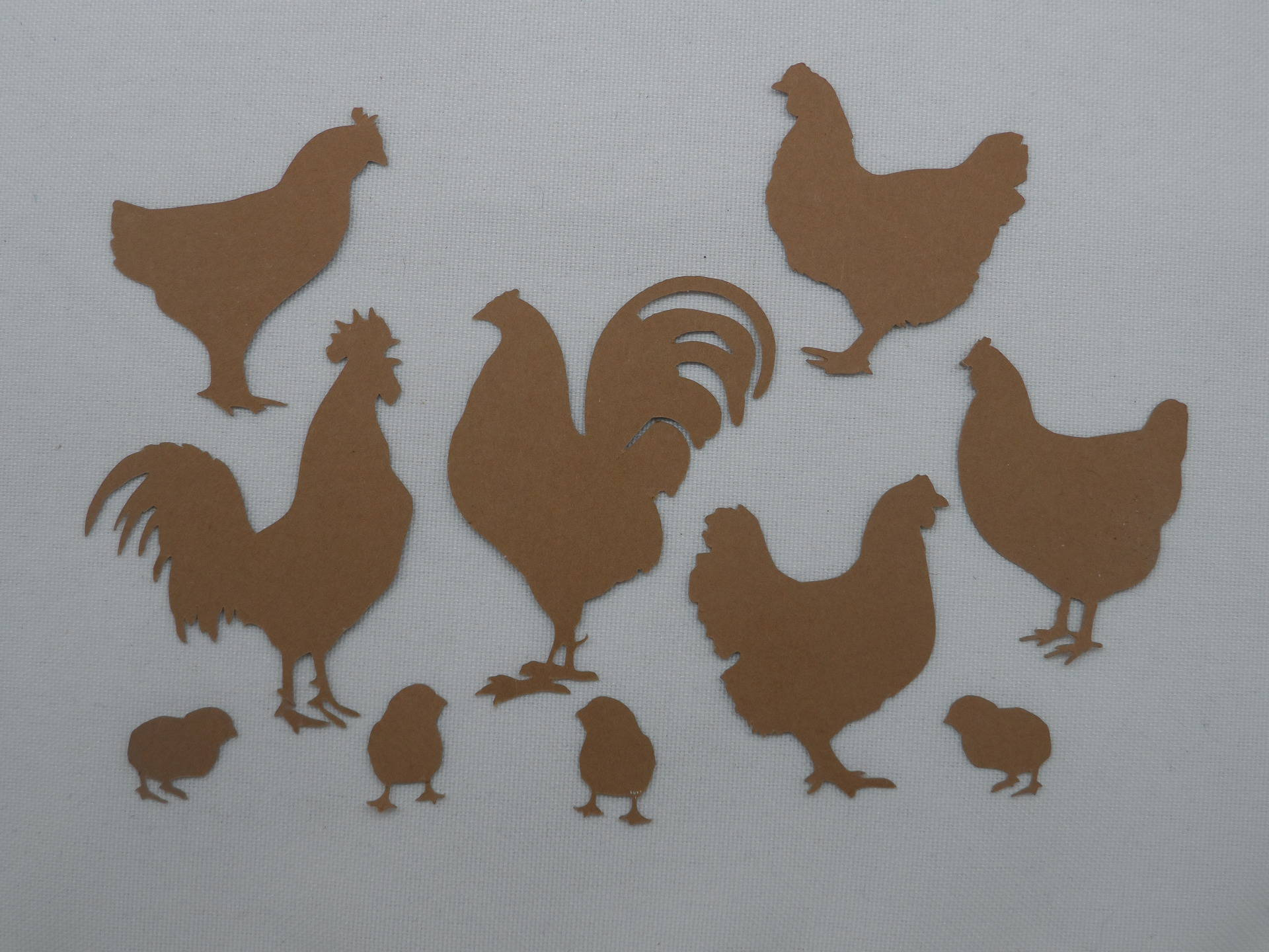 Pays de poulet coqs Papier Peint Bordure LBO222B