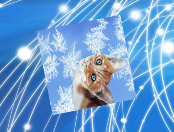 carte   carrée avec chat  : regardes la neige tomber!