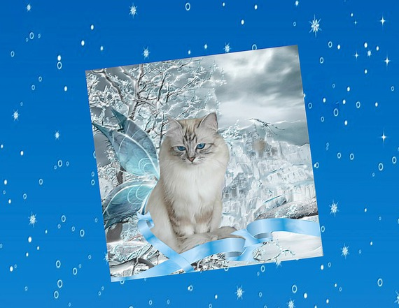 Carte  de voeux avec chat: rêve de givre