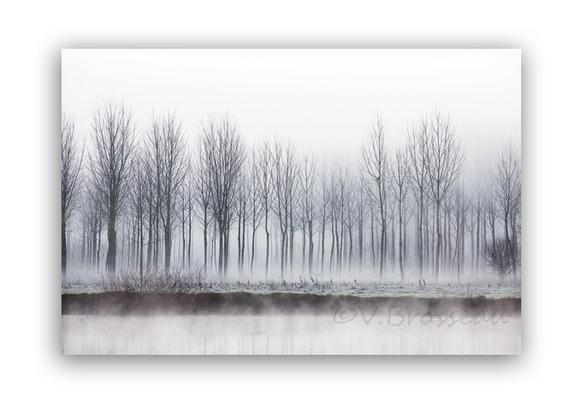photographie paysage zen rivière  - arbres dans la brume matinale- artistique photo nature, décoration murale