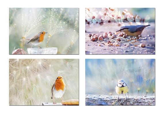 9   photos oiseaux pastel et fleurs, oiseau rouge-gorge, mésange bleue, sittelle, fleurs