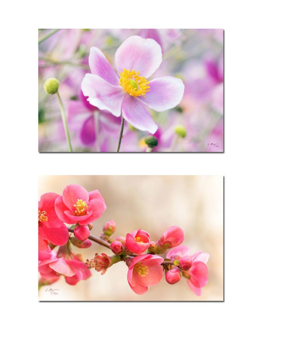 Ensemble 9 cartes postales fleurs, photos fleur