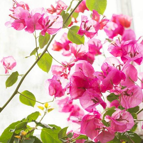6 Cartes Postales Fleurs Bouquet De Fleur Pétales Séchés Anniversaire Fête