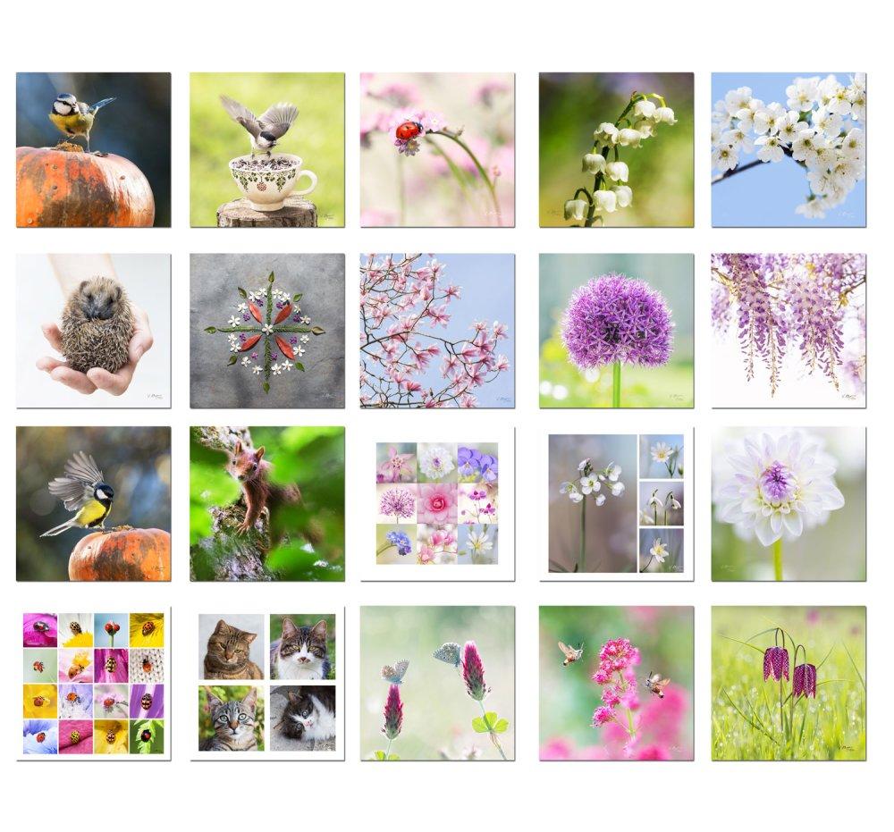 20 cartes postales photo fleurs et animaux,