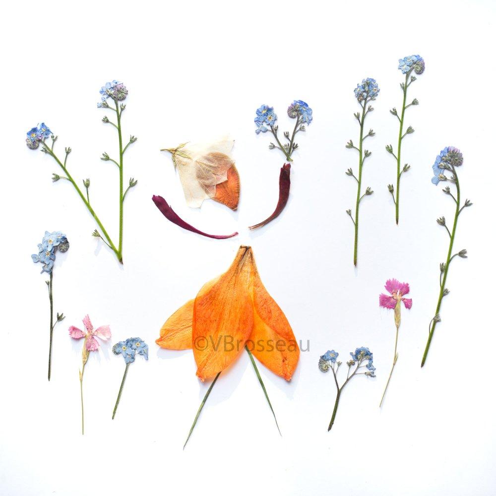 Carte pétales de fleurs séchés, myosotis,  carte anniversaire