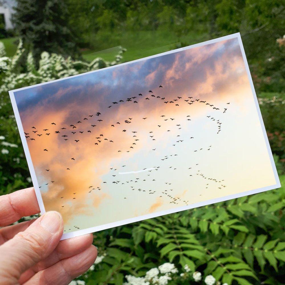 Carte nature photo des oiseaux dans le ciel du soir