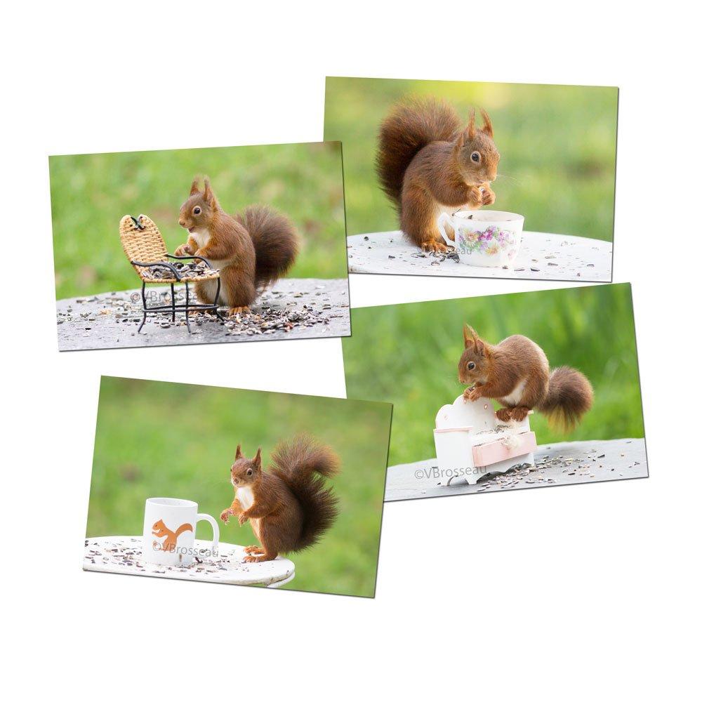 Ensemble quatre petites photos écureuil décoratives