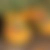 Chaussons mules en laine feutrée et tissu, semelle caoutchouc - taille 35-36