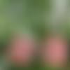 Boucles d'oreilles cube minimaliste rouge