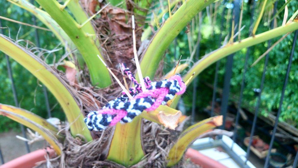 Tresse fuchsia à rayures noires et blanches