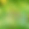 Tresse jaune à rayures noires et blanches