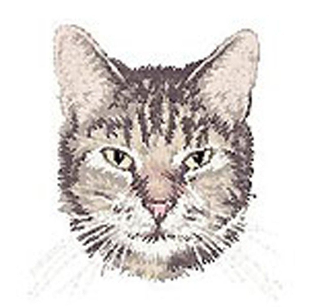 Écusson brodé chat